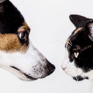 morfología perro gato