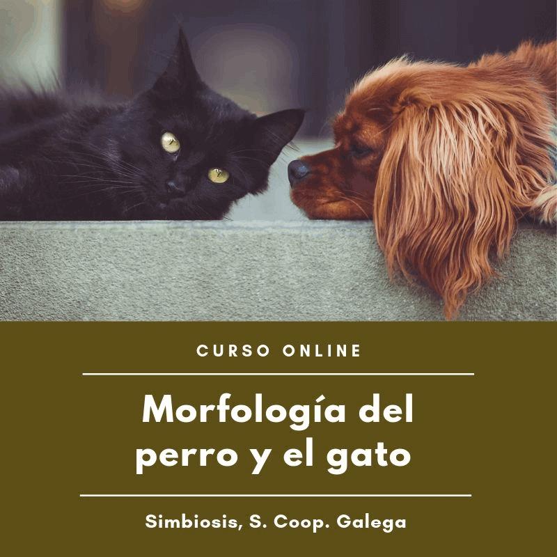 morfología del perro y el gato