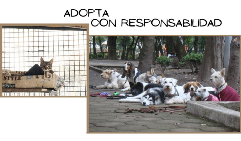 Adopta mascotas con responsabilidad