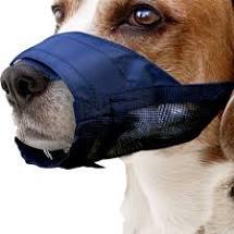 bozal abrazadera Bozales adecuados para perros